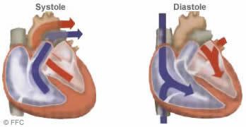 Systole et Diastole