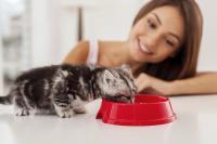 regime alimentaire du chat
